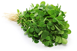 Fenugreek leave